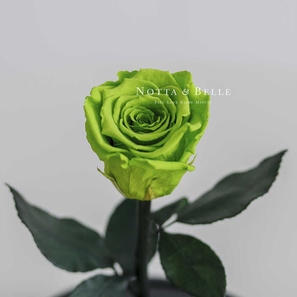 Mini Neongrün Rose