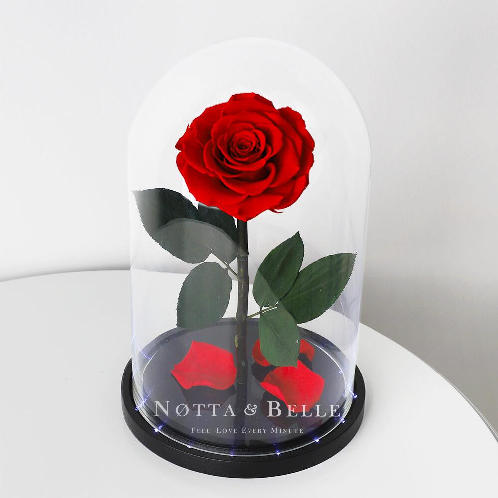 Krasnaya roza v kolbe King c podsvetkoy