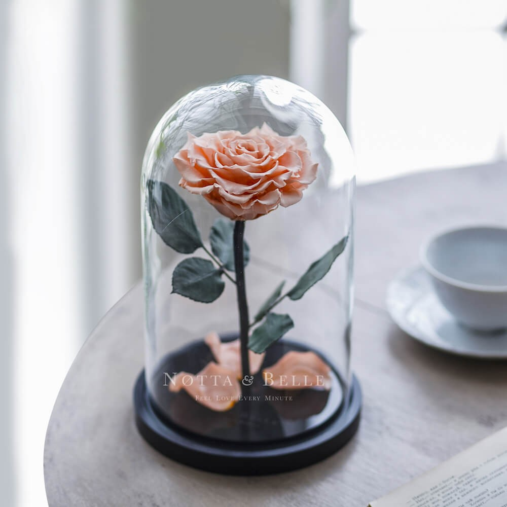 forever peach rose in glass dome - premium