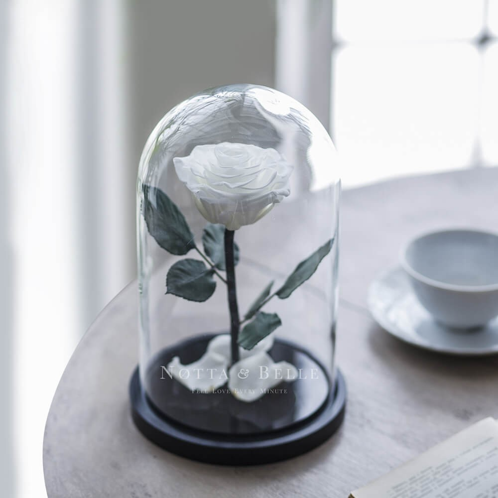 forever white rose in glass dome - premium