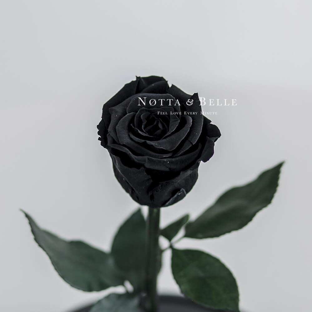 Черная роза в колбе Mini
