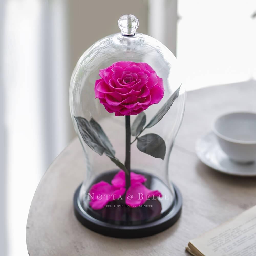Ярко-Розовая роза в колбе Premium X