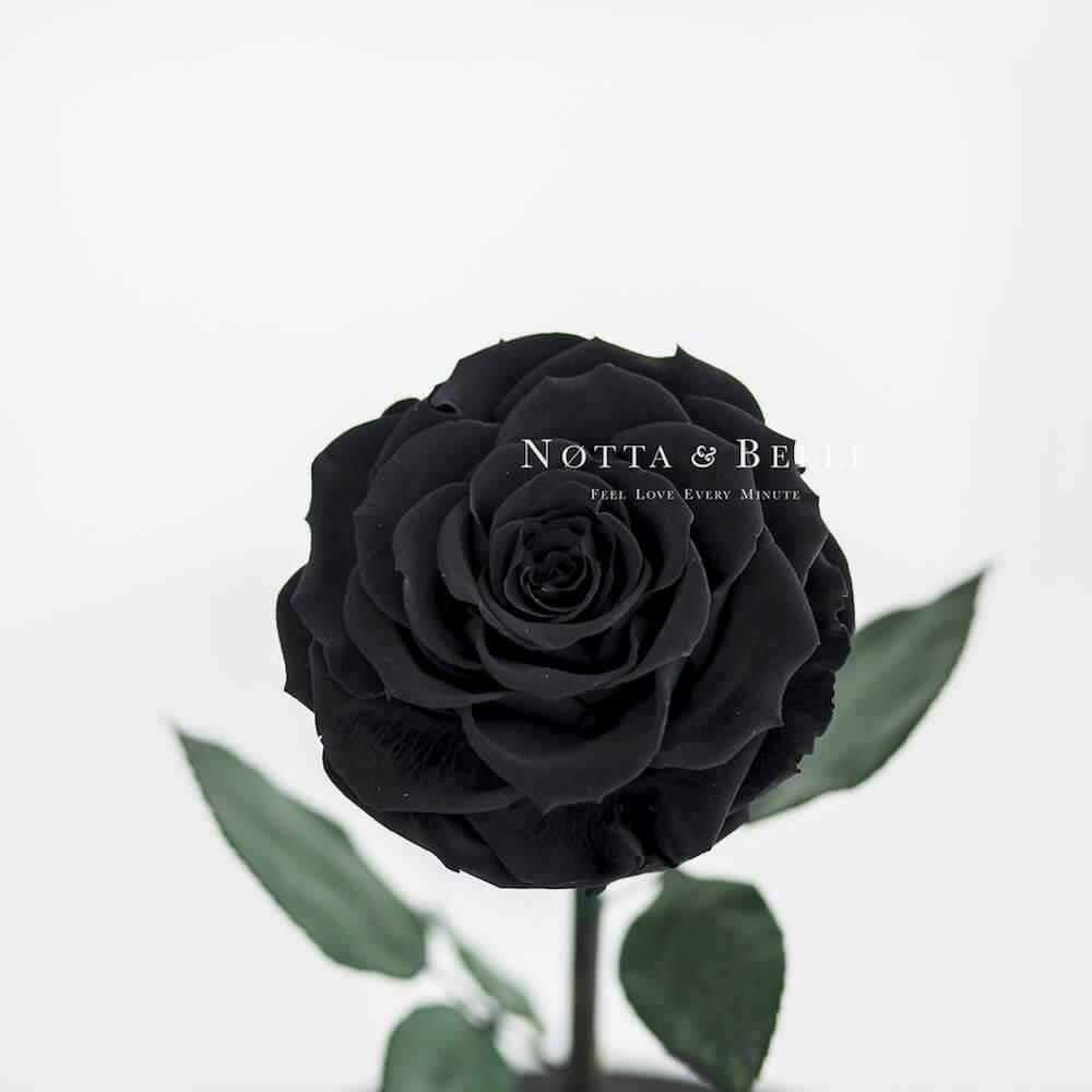 Бутон черной розы в фигурной колбе - Premium X