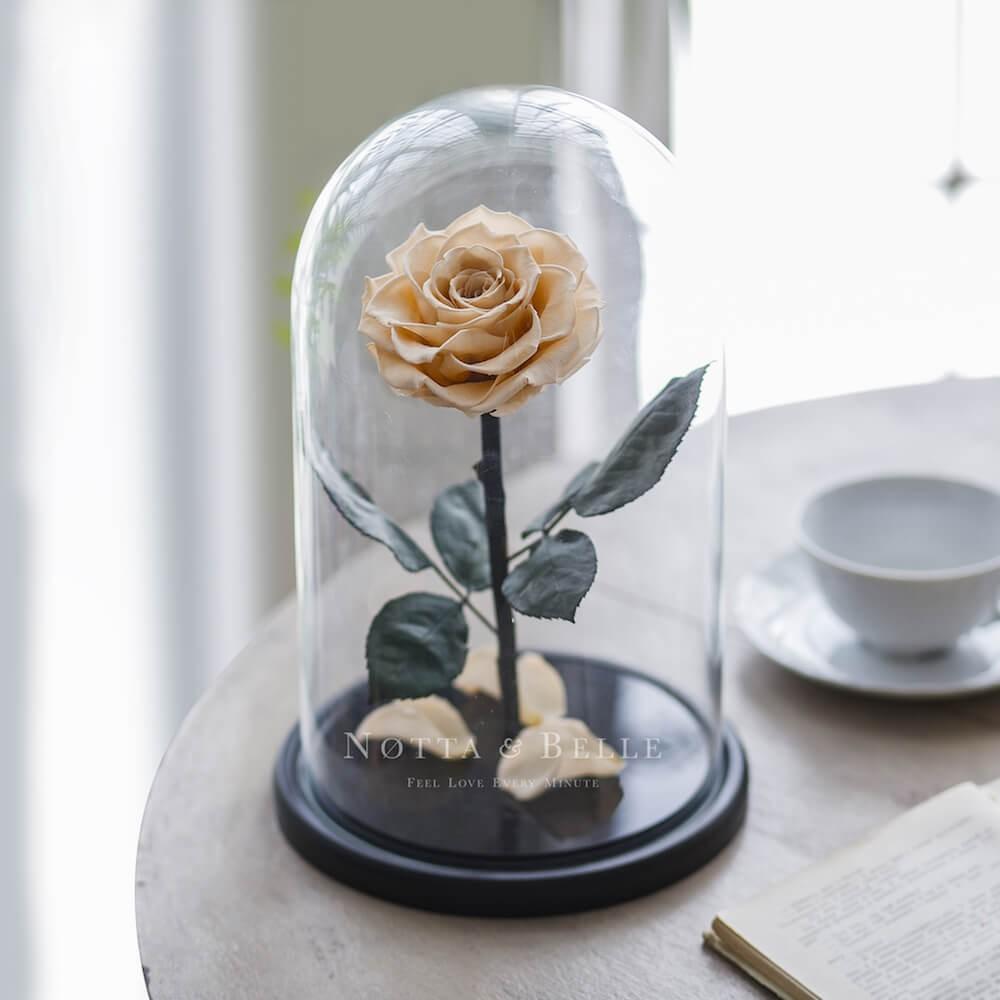 Роза цвета шампань в колбе - King