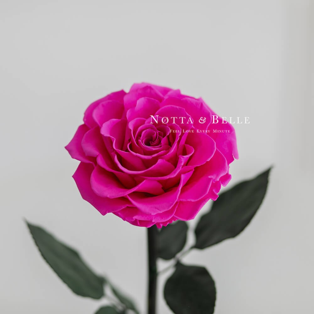 Бутон ярко розовой розы в колбе - King