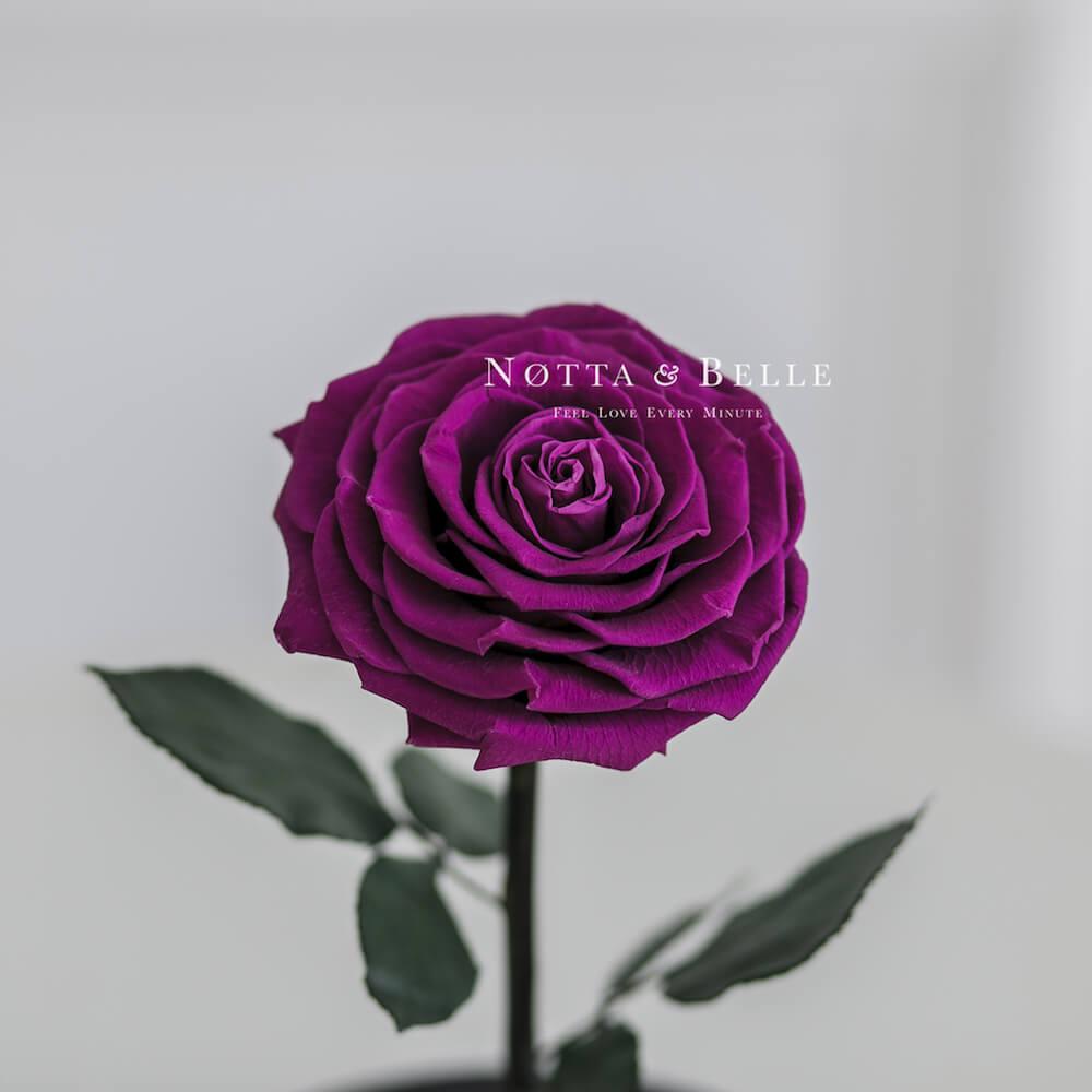 Бутон фиолетовой розы в колбе - Premium