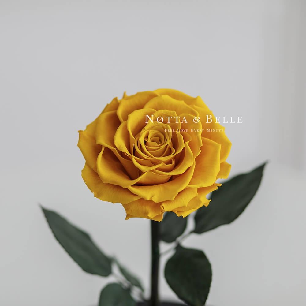 Желтая роза в колбе Premium