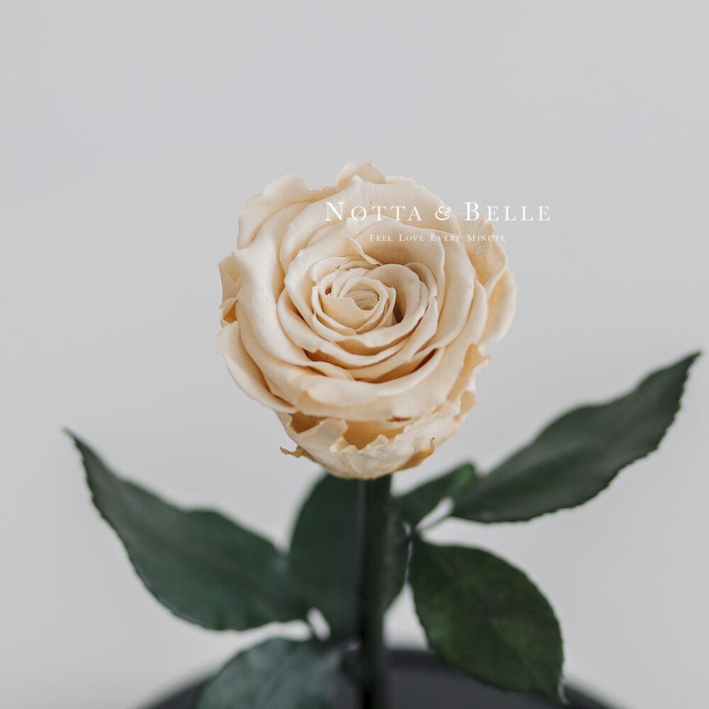 Бутон розы в колбе цвета шампань - Mini