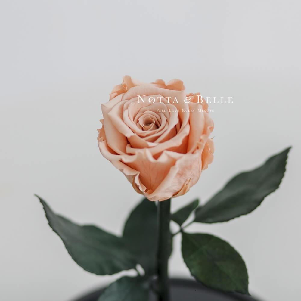 Бутон персиковой розы в колбе - Mini