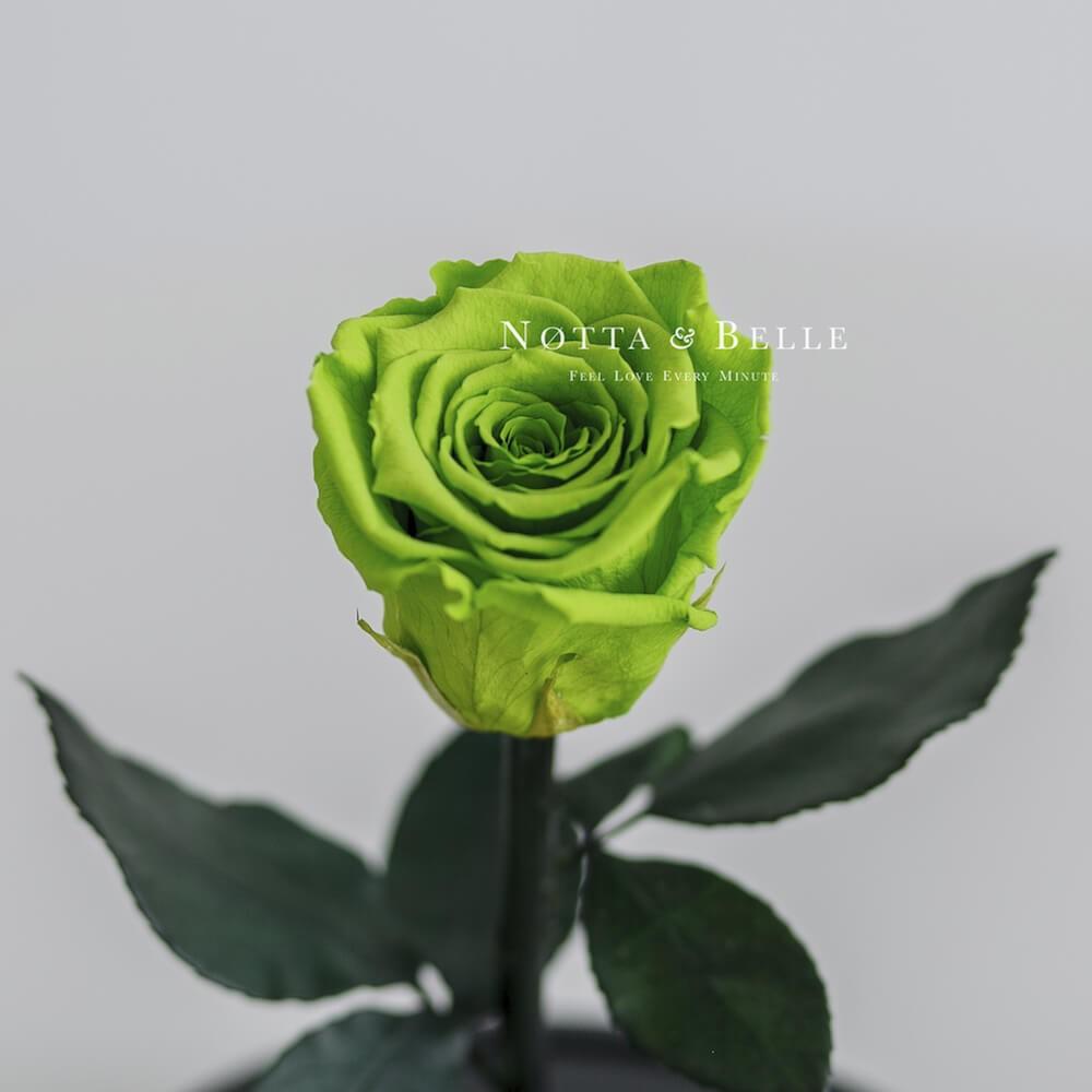 Салатовая роза в колбе Mini