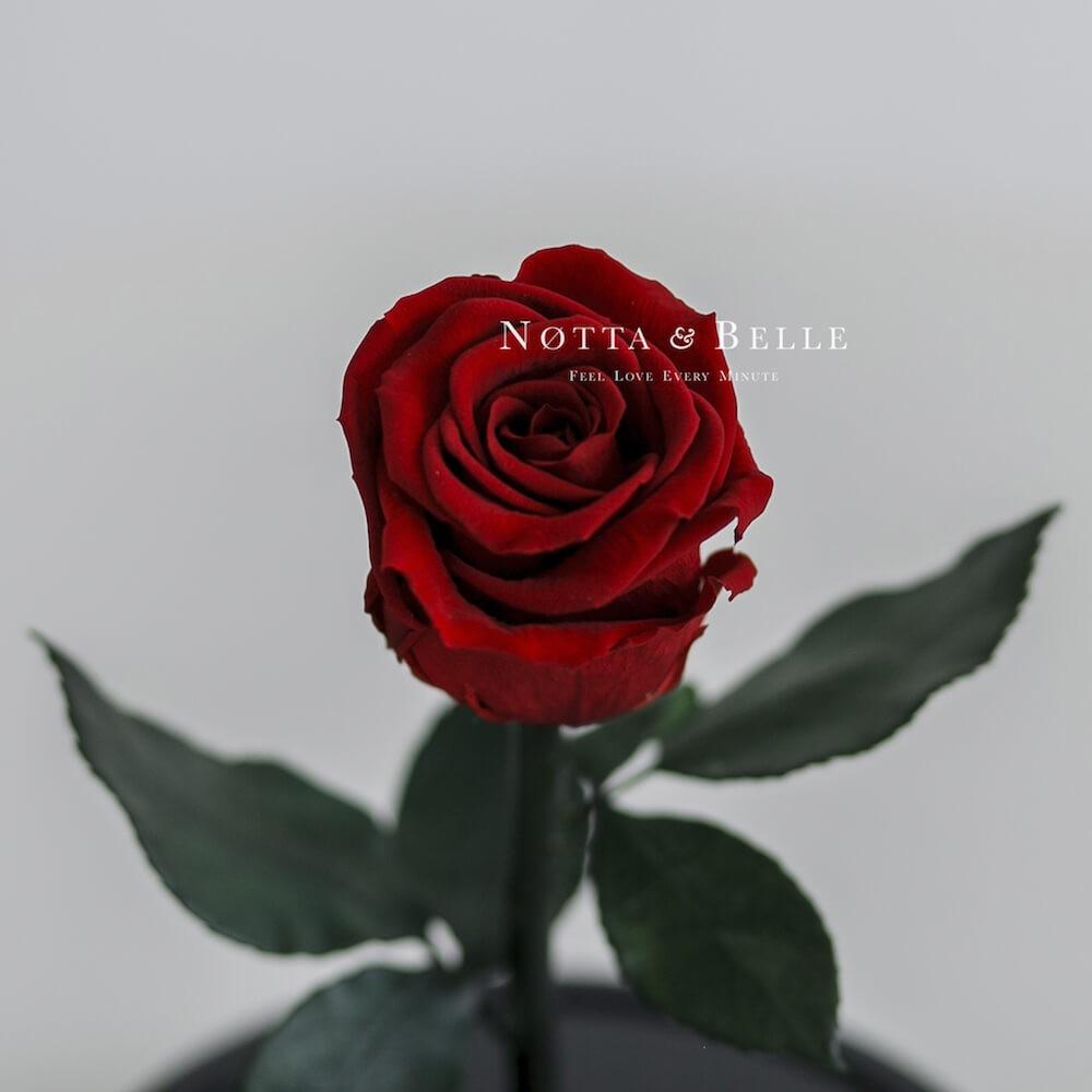 Бутон бордовой розы в колбе - Mini