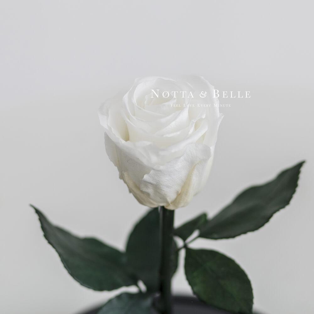 Бутон белой розы в колбе - Mini