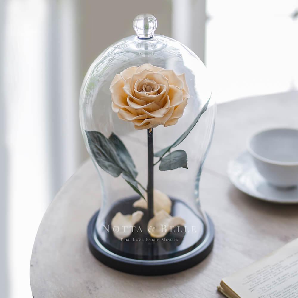 Роза цвета шампань в фигурной колбе - Premium X