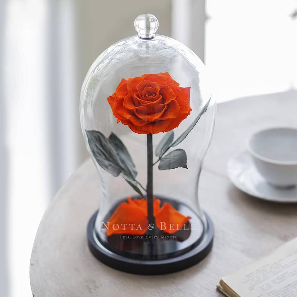 Оранжевая роза в фигурной колбе - Premium X