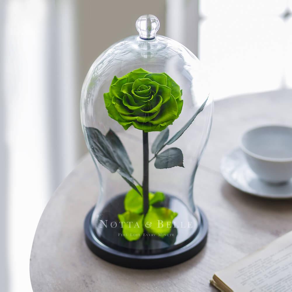 Салатовая роза в колбе Premium X