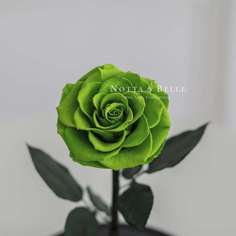 Бутон салатовой розы в колбе - Premium