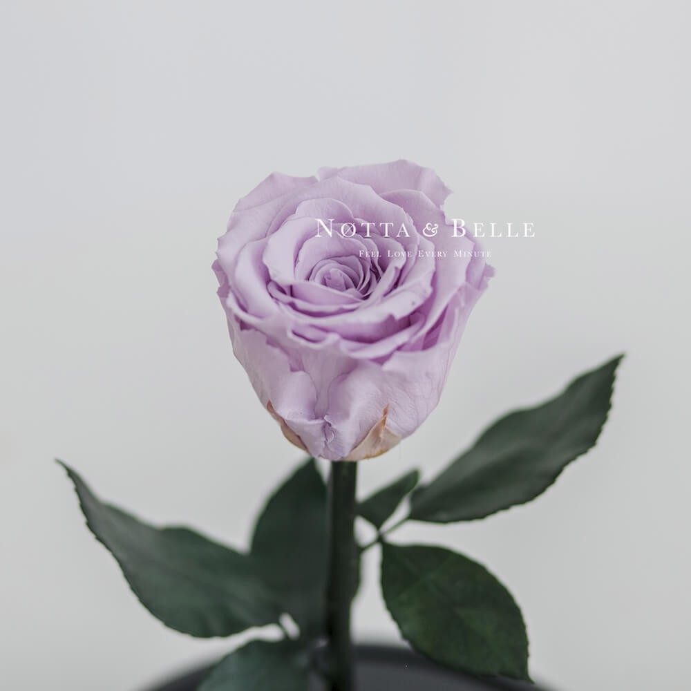 Лавандовая роза в колбе Mini