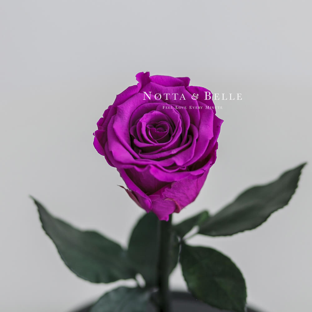 Фиолетовая роза в колбе Mini