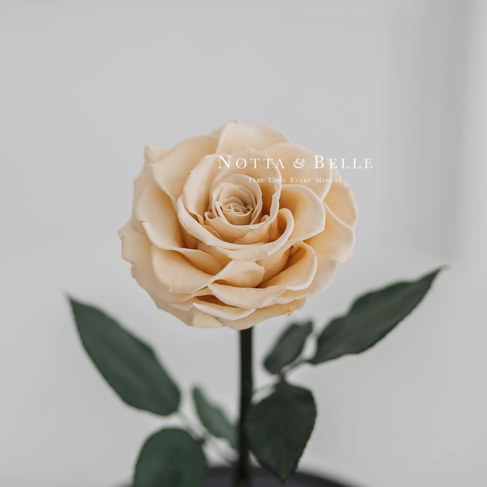 Бутон розы цвета шампань в колбе - King