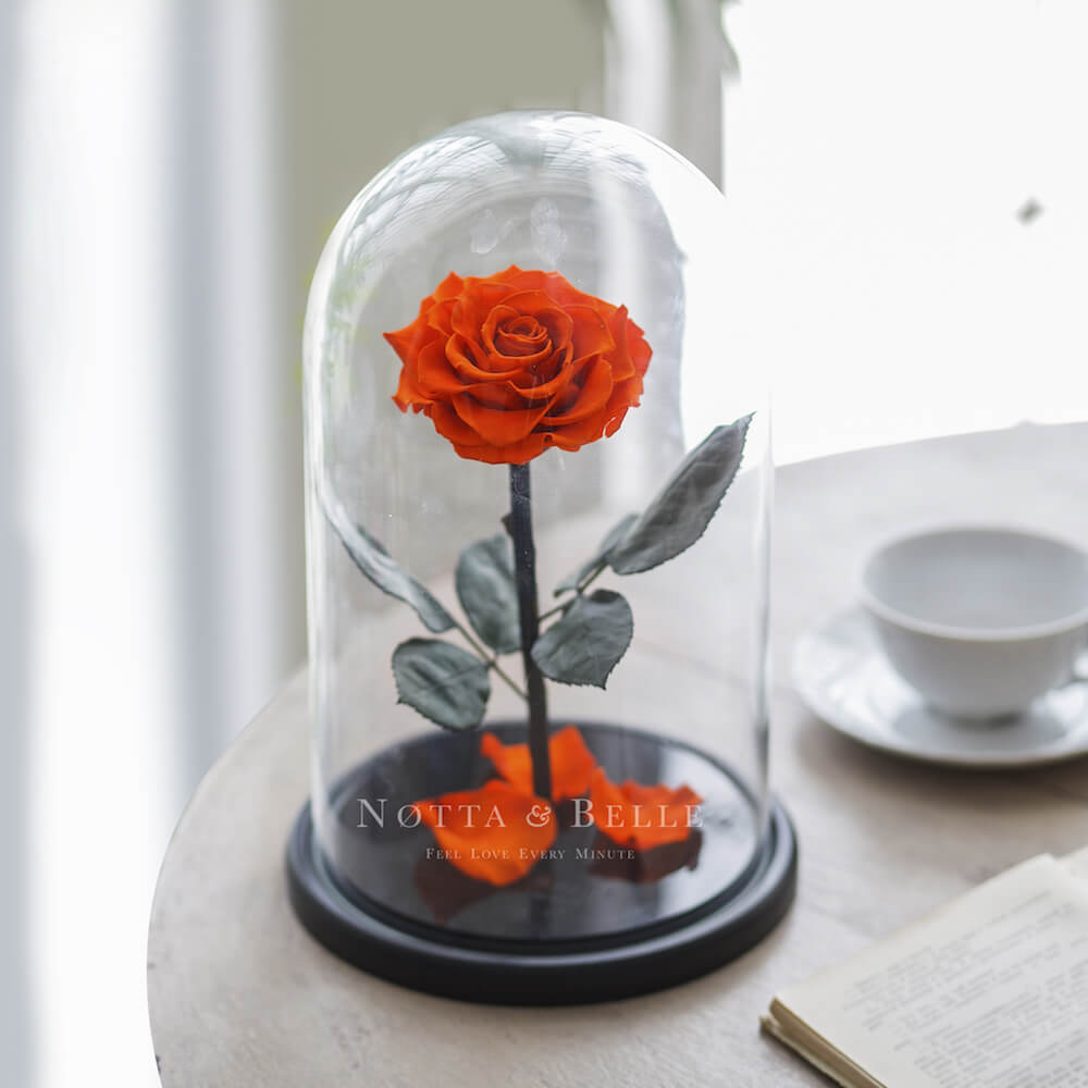 Оранжевая роза в колбе - King