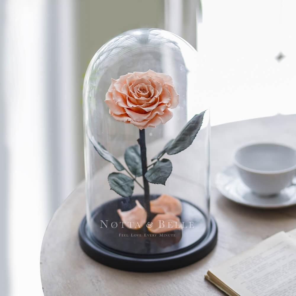 Персик роза в колбе - King