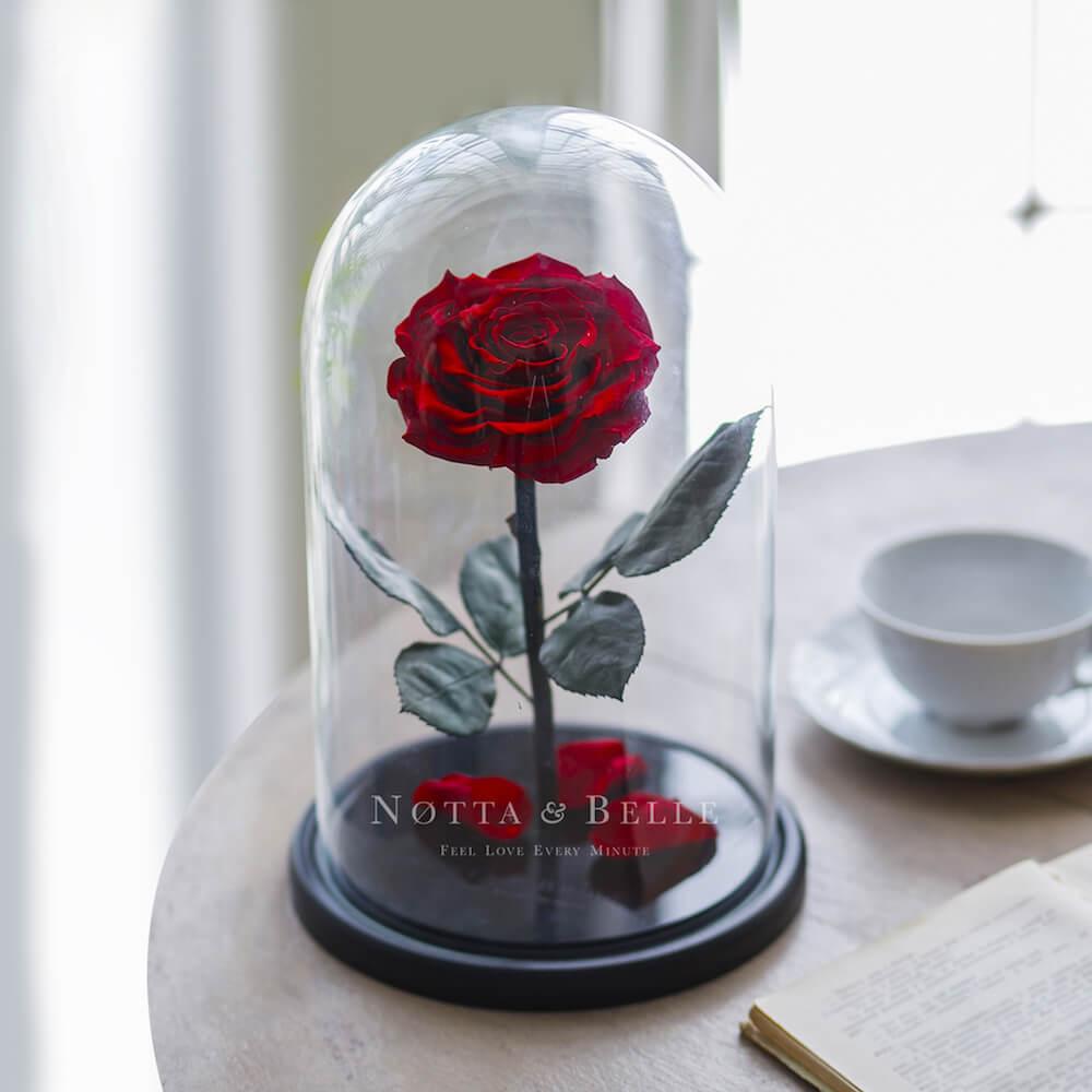 Бордовая роза в колбе - King