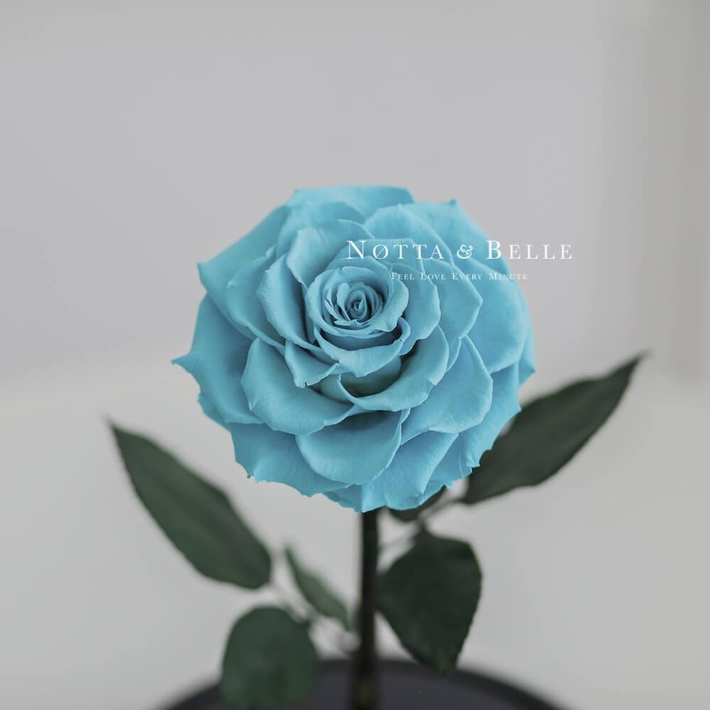Premium tyrkysová Růže ve skle