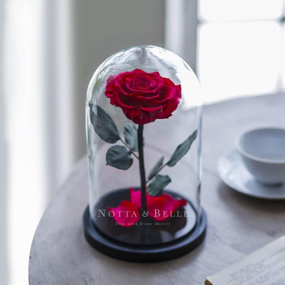 forever fuchsia rose in glass dome - premium