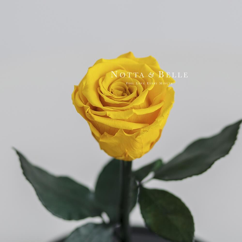 Mini žlutá Růže ve skle