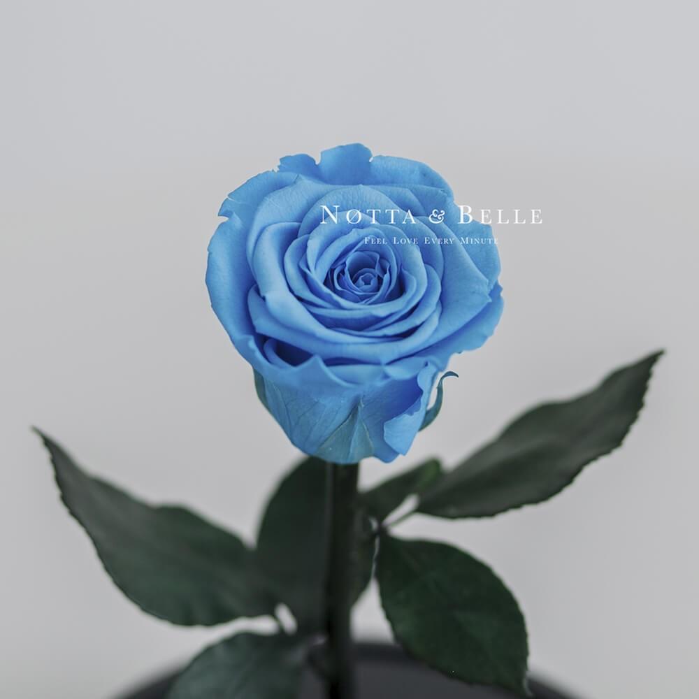 Mini světle modrá Růže ve skle