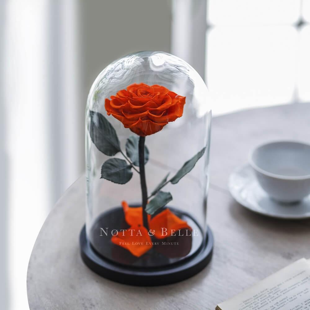 forever orange rose in glass dome - premium