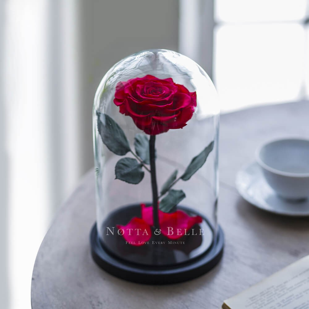 forever fuchsia rose in glass dome - premium