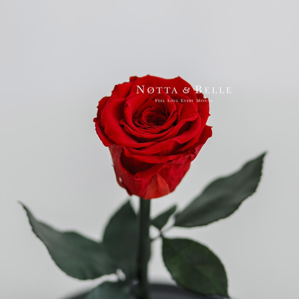 forever red rose - mini