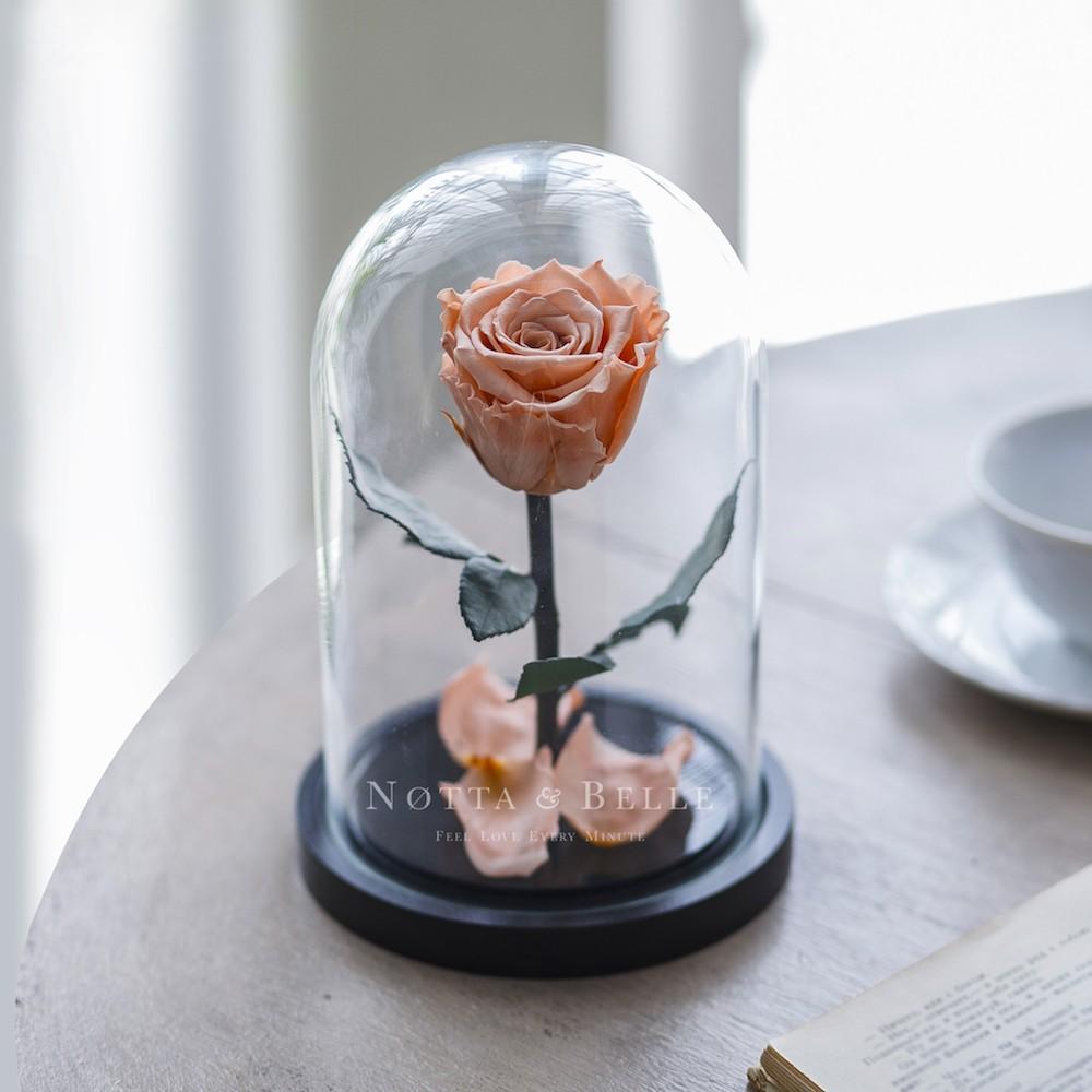 forever peach rose in glass dome - mini