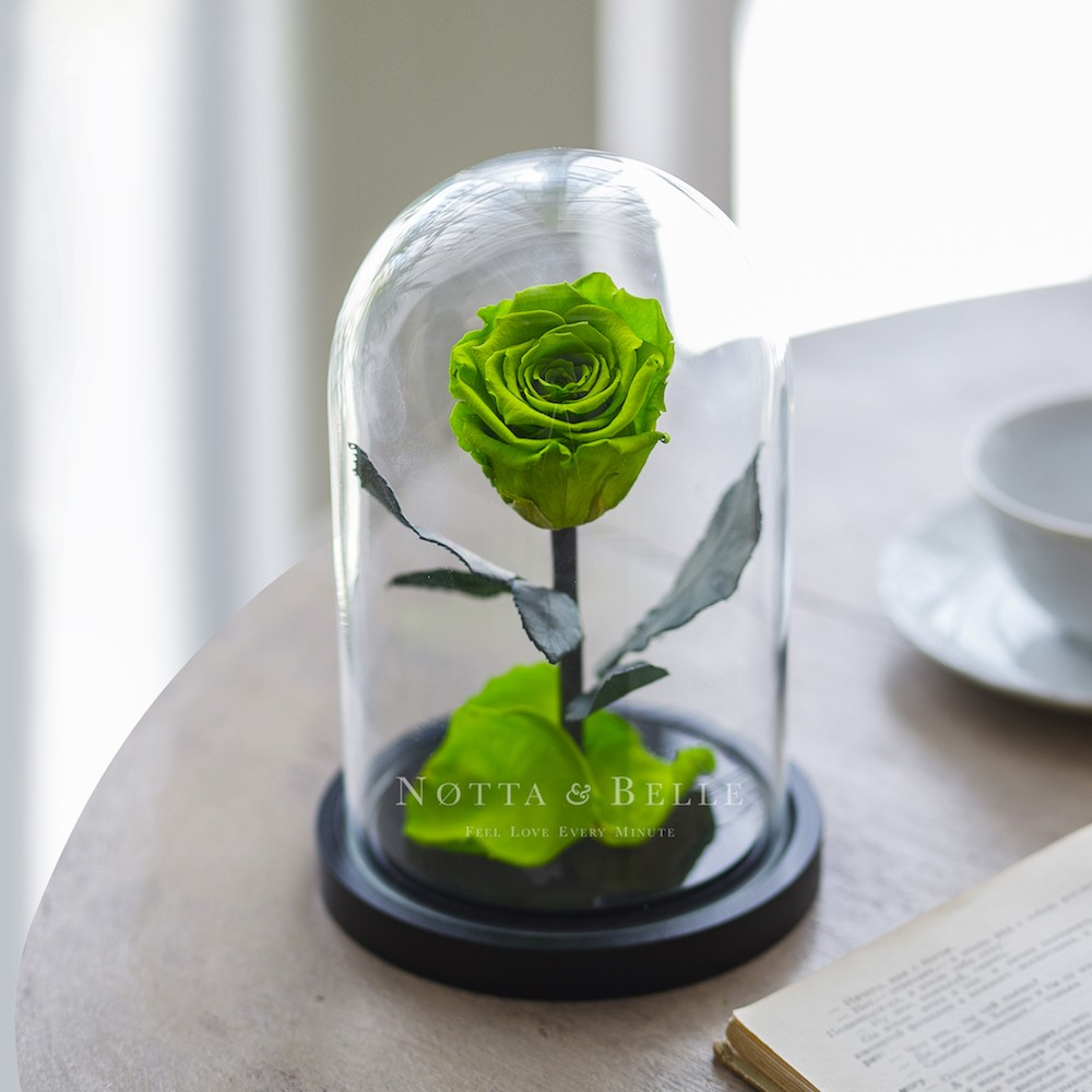 forever lime green rose in glass dome - mini