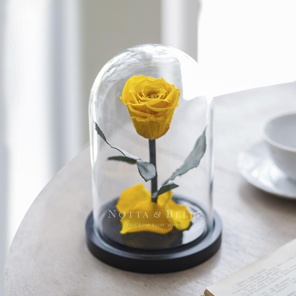 La gialla Mini Rosa