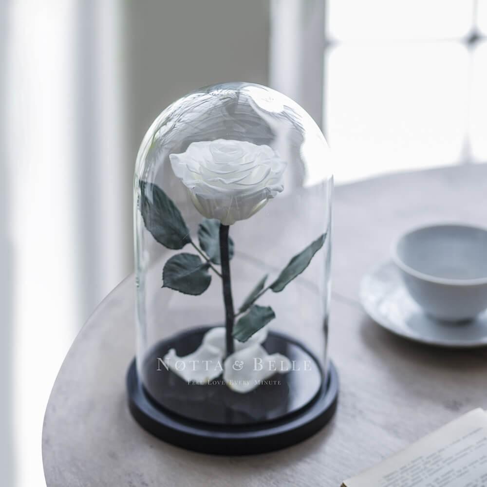 Rosa Blanca Premium