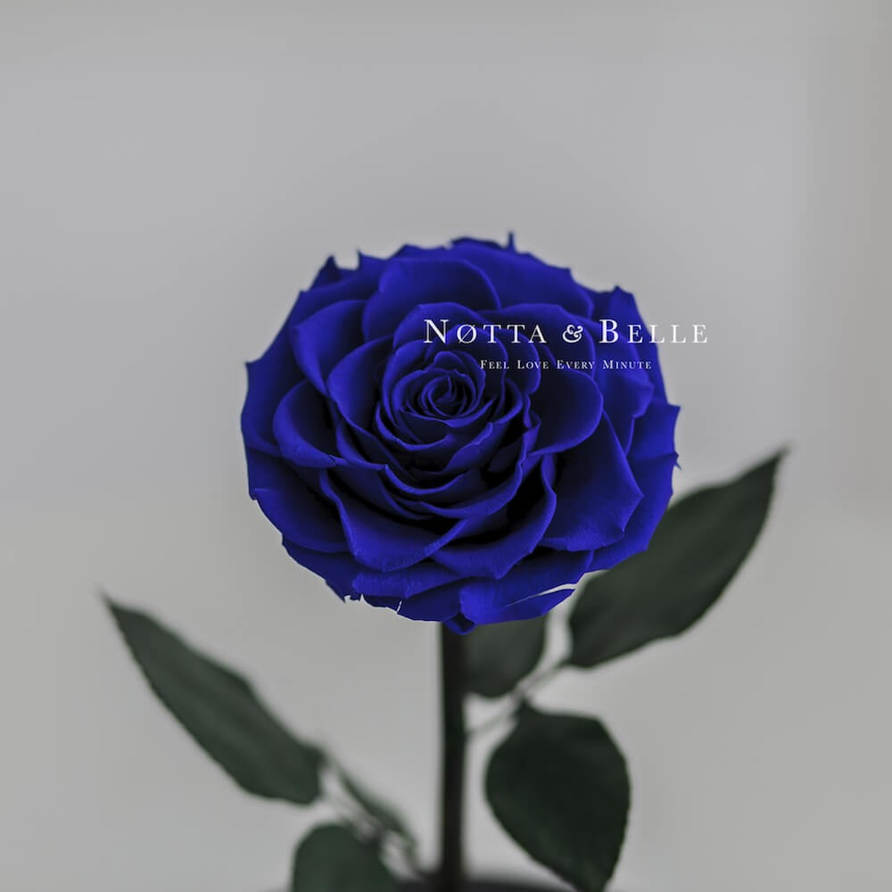 Бутон синей розы в колбе - Premium