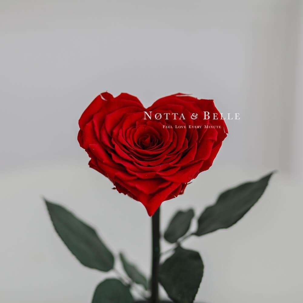 Бутон в форме сердца красной розы в колбе  - Premium