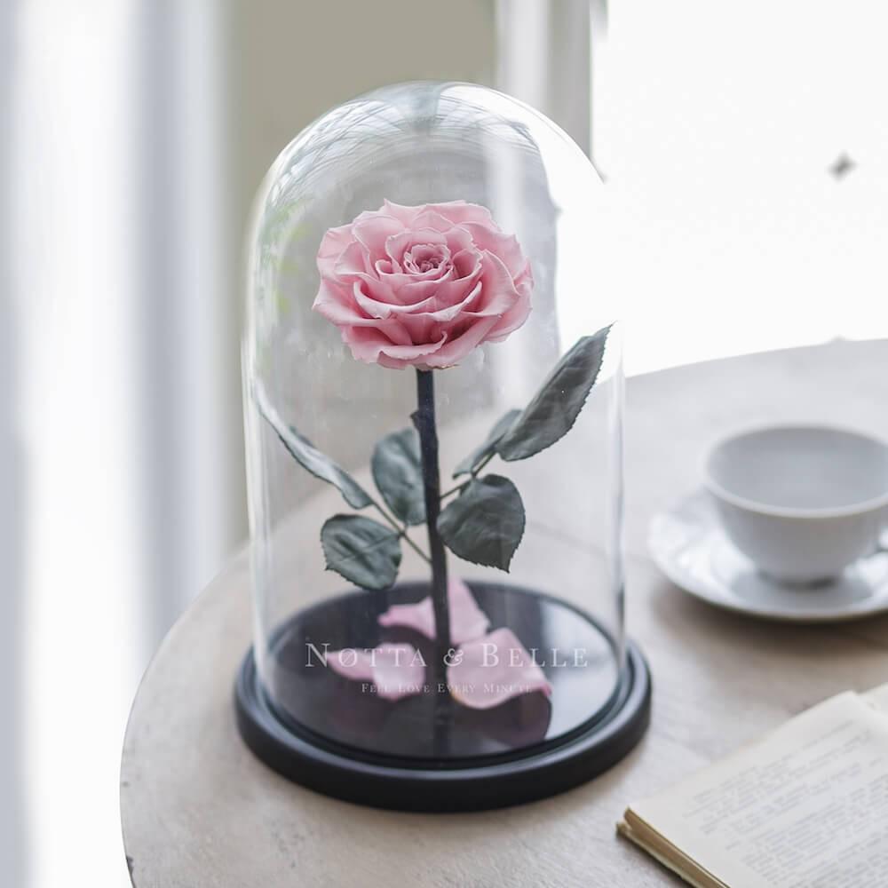 King jemně růžová Růže ve skle