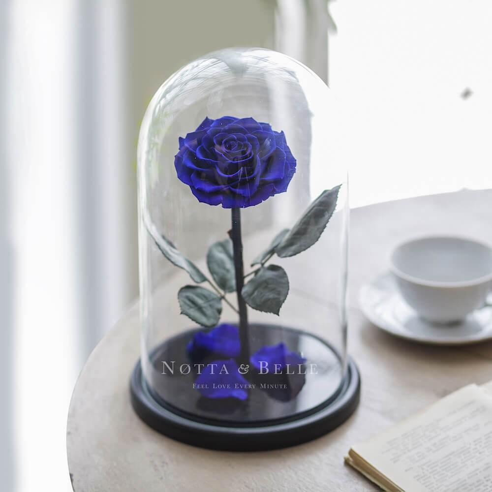 King modrá Růže ve skle