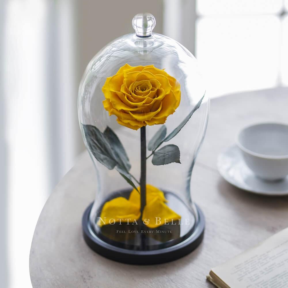 Premium X žlutá Růže ve skle