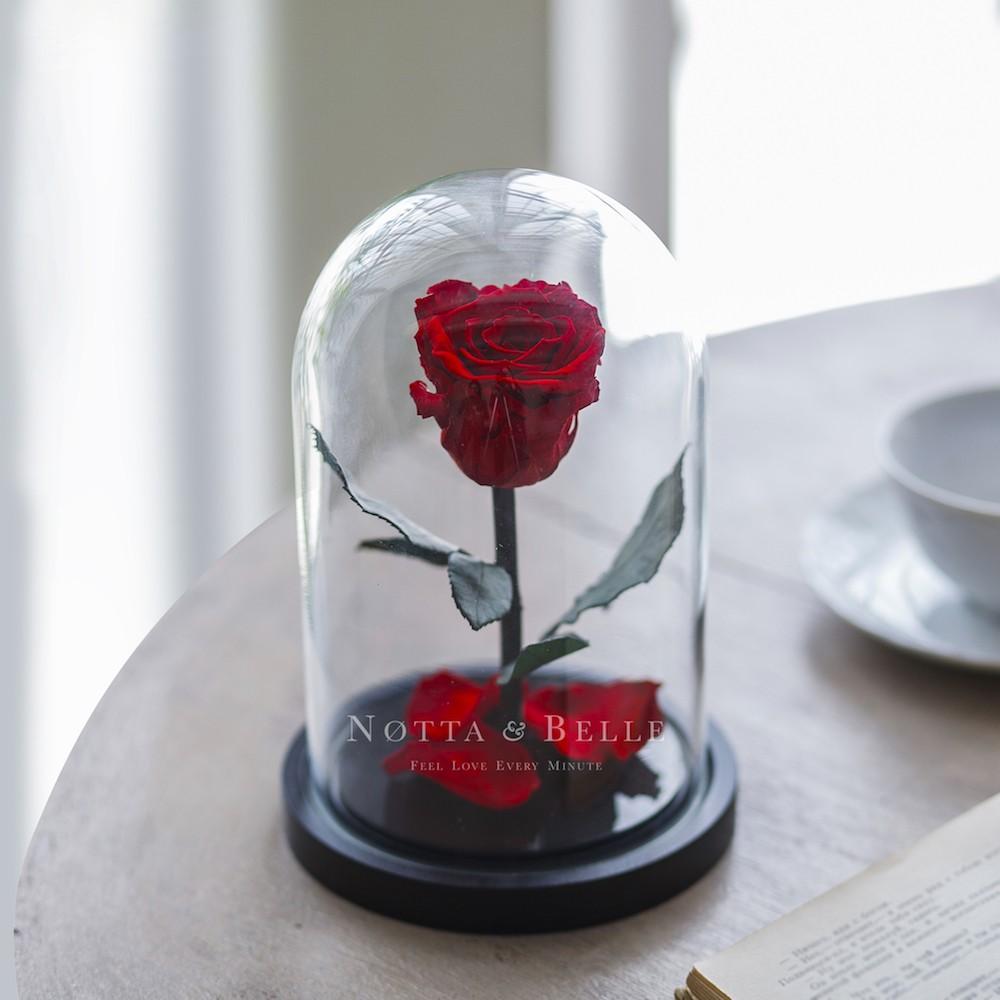 Красная роза в колбе Mini по акции