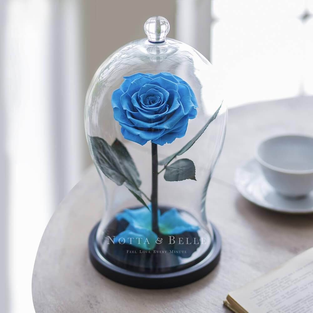 Premium X blau Rose