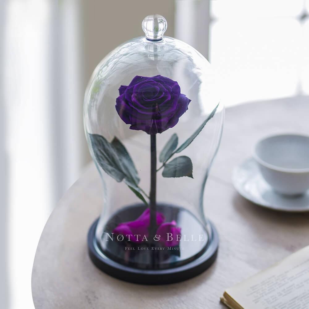 Premium X purple Rose