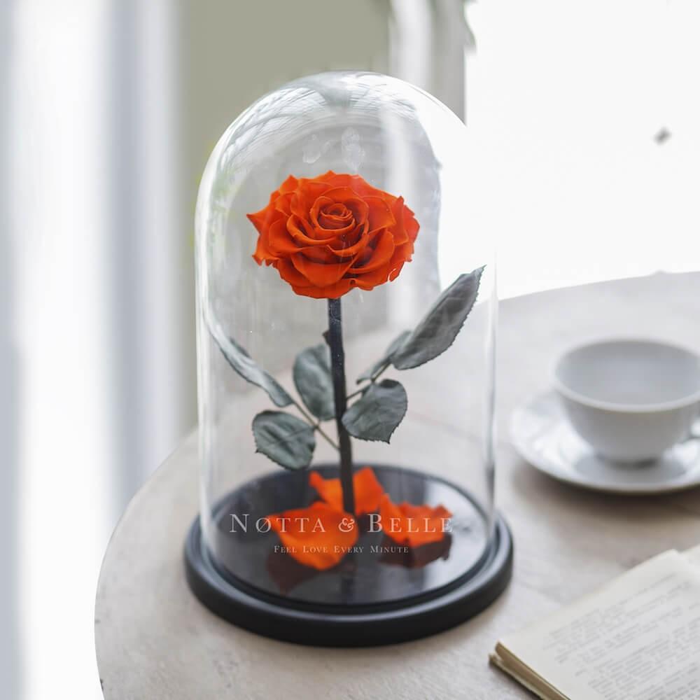 King oranžová Růže ve skle