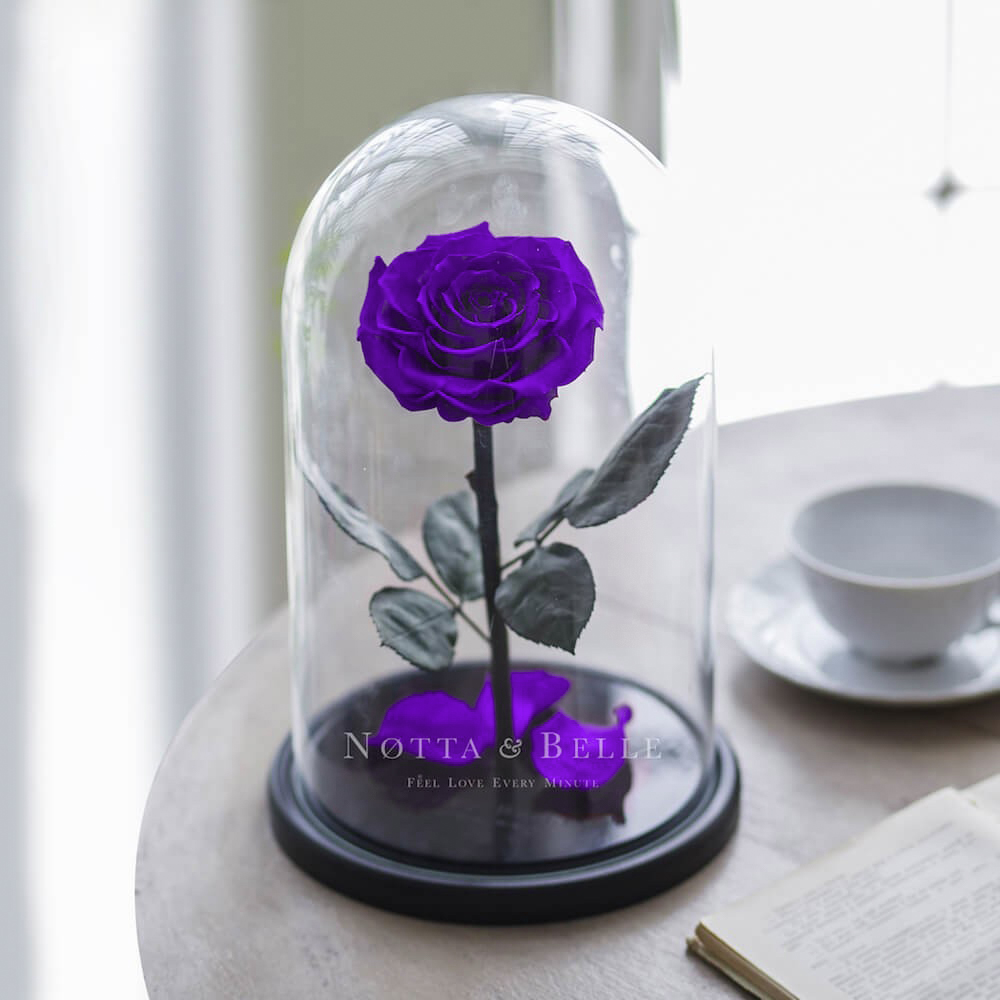 Rose King Violette