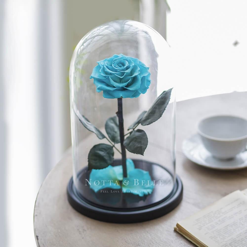 King turquoise Rose