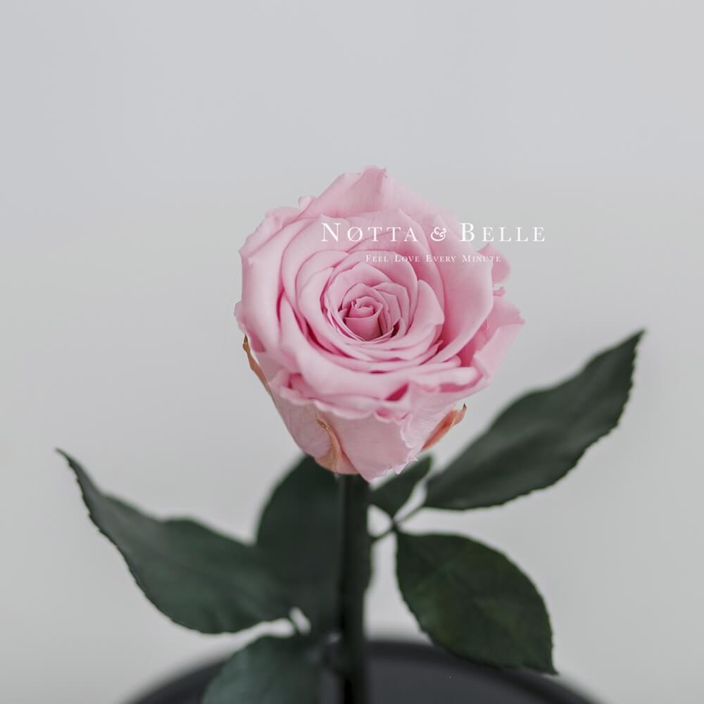 Розовая роза в колбе Mini