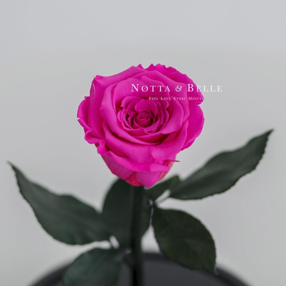 Ярко-розовая роза в колбе - Mini